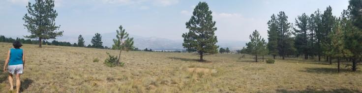 6 acres BV_ 3 elk (1)